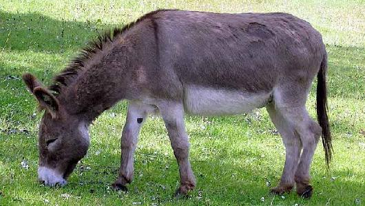 Noticia: PASEOS EN BURRO